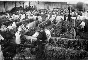 Historia del plátano de Canarias - Bodegas Platé