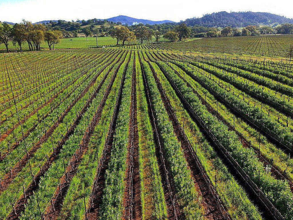 El origen y la tradición del vino