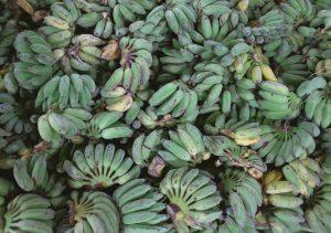 Plátano de Canarias - Bodegas Platé