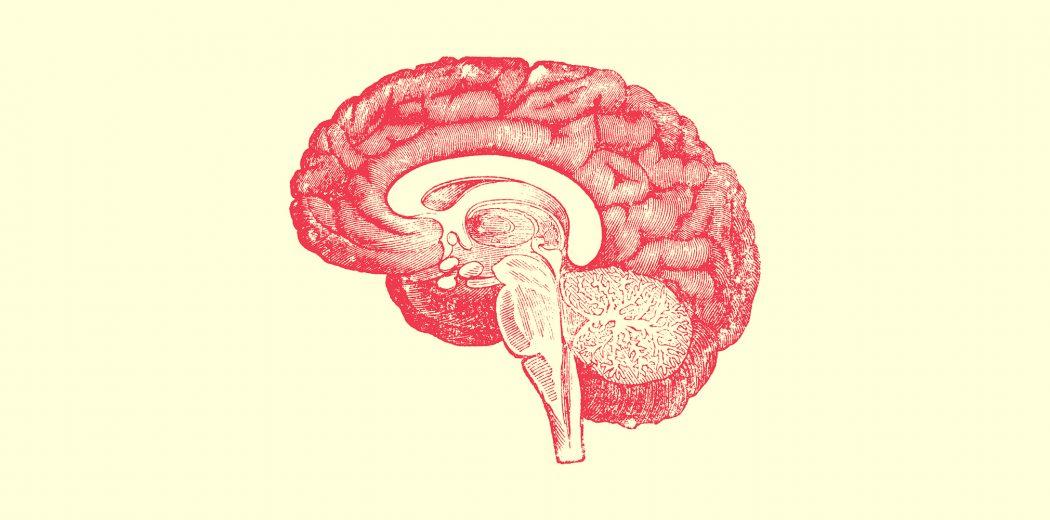 neuroenología